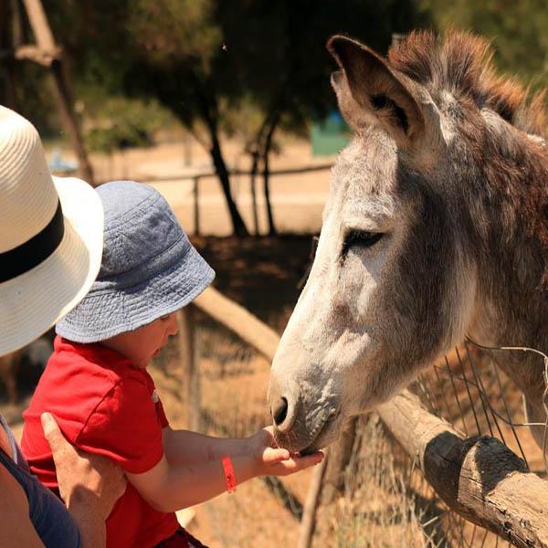 Rhodes Ostrich Farm