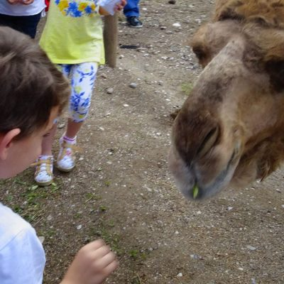 Rhodes Zoo