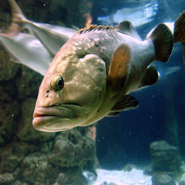 Rhodes Aquarium Fishes